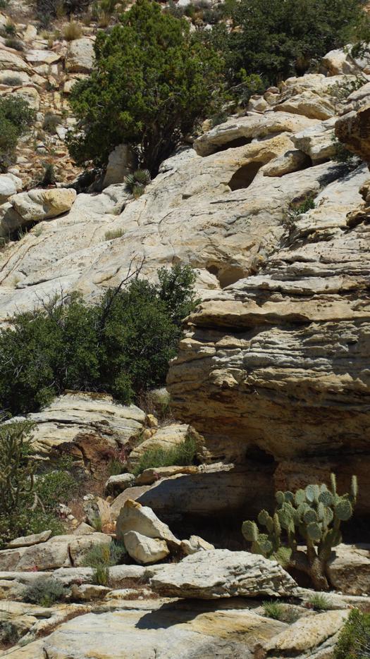 redrockcactus.jpg